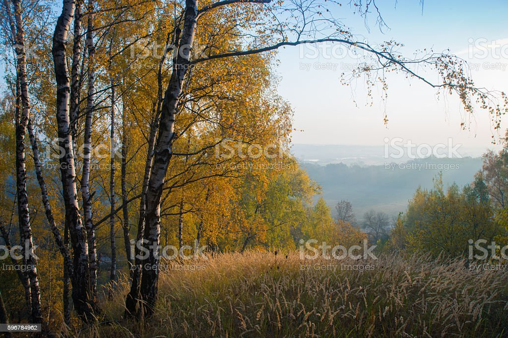 verge of autumn forest stock photo