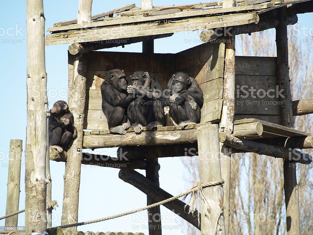 verliebte Affen stock photo