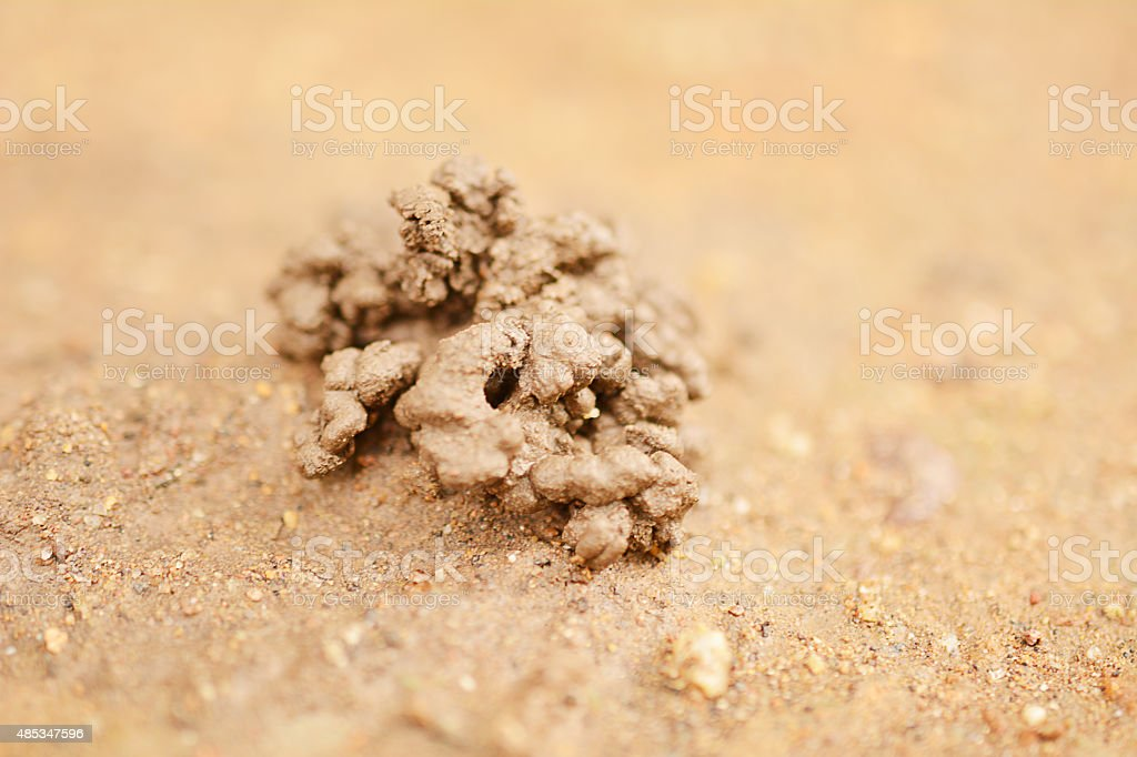 Vermicompost for agriculture stock photo