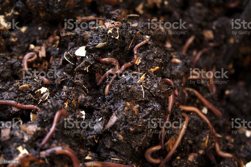 Vermicomposter stock photo
