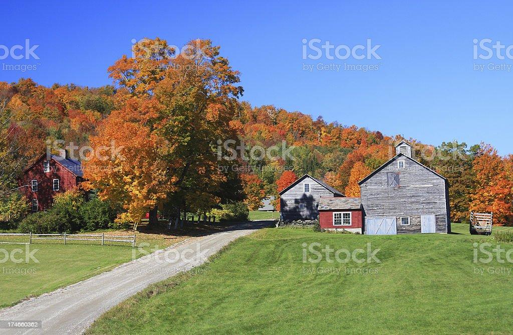 Vermont Foliage stock photo
