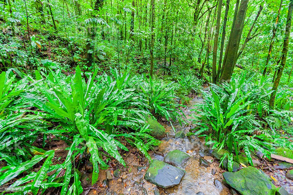 Vermont Nature Trail, St. Vincent royalty-free stock photo
