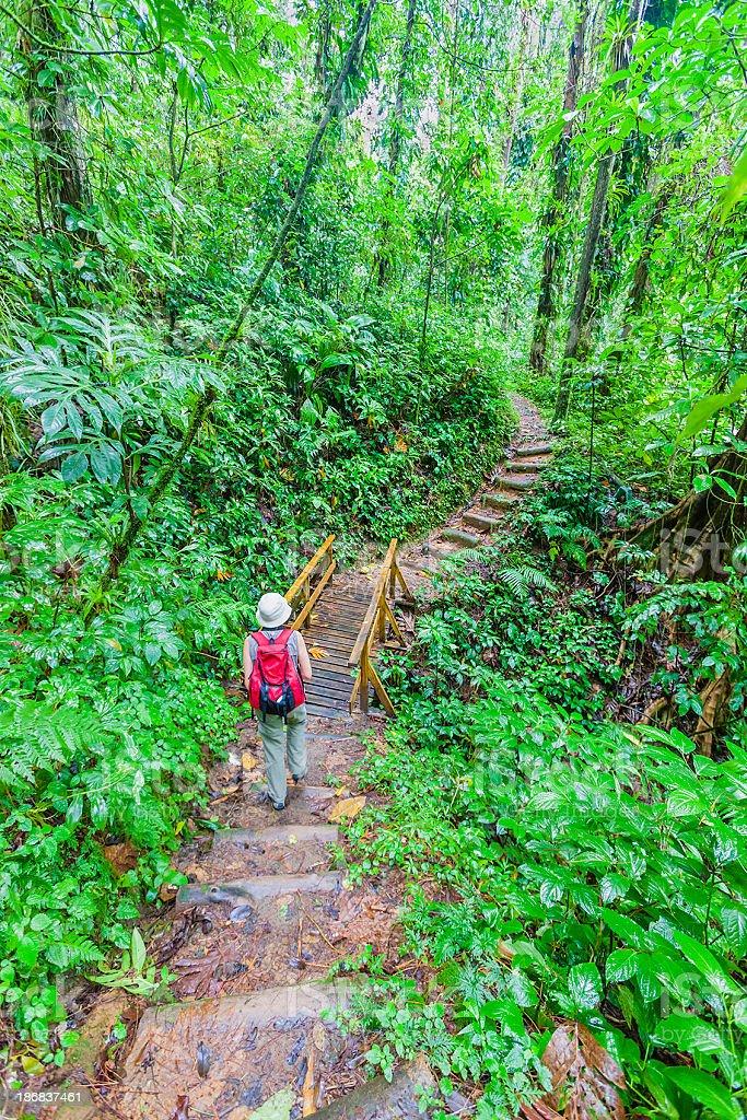 Vermont Nature Trail, St. Vincent stock photo