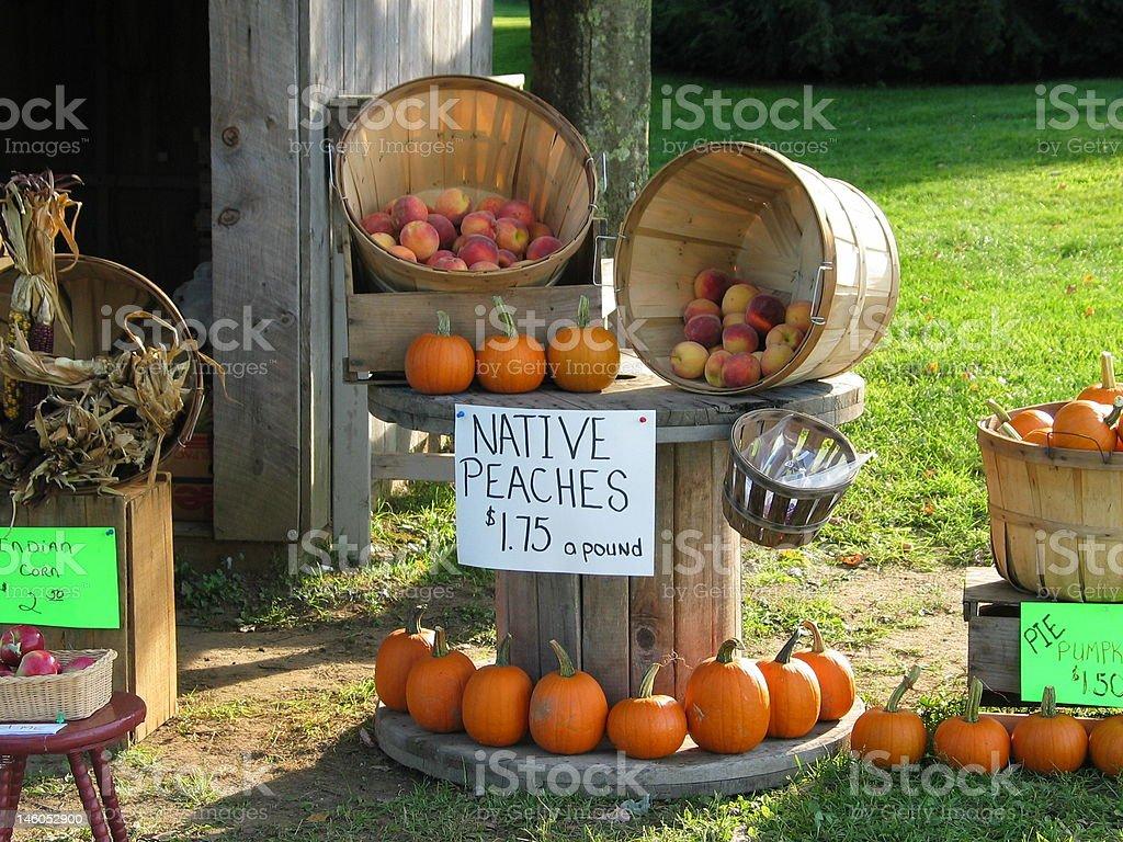 Vermont's Autumn Harvest stock photo