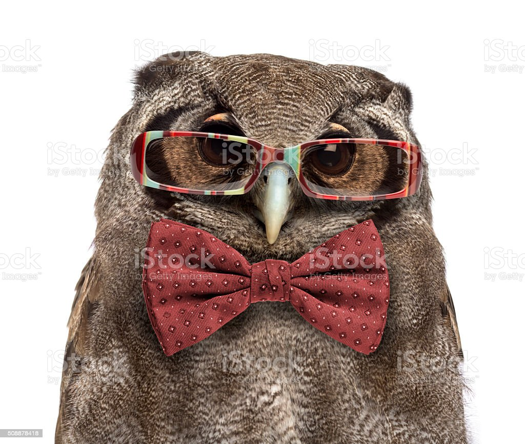 Verreaux's eagle-owl, Bubo lacteus, wearing glasses and a bow tie stock photo