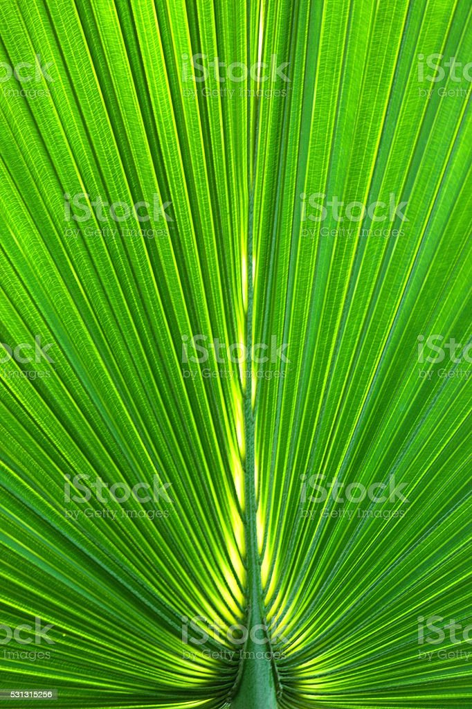 Vertical Abstract image of Green Palm leaves in nature stock photo