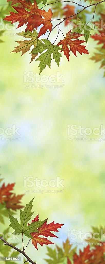 Vertical Autumn Foliage royalty-free stock photo
