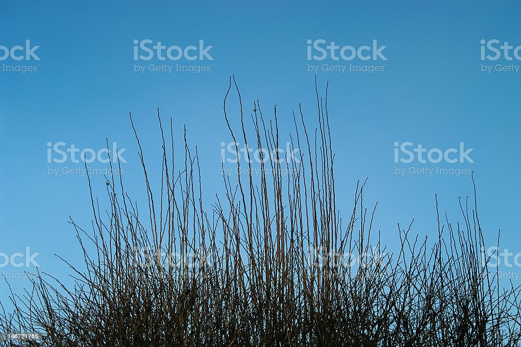 Vertical Branches royalty-free stock photo