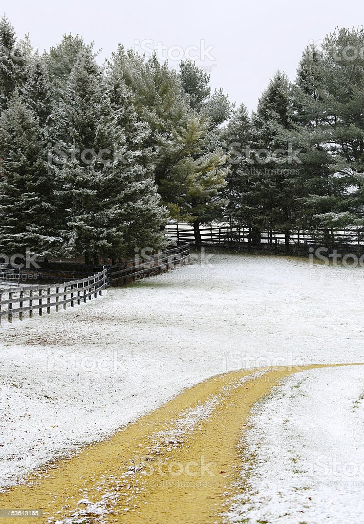 Vertical dirt road and pine trees with light snow royalty-free stock photo