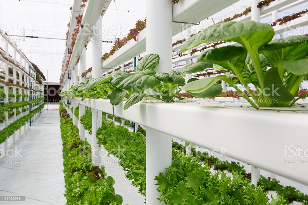 Vertical Farming Hydroponics stock photo