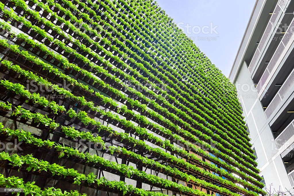 Vertical Garden – Green Wall –  BioWall stock photo