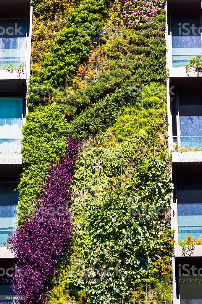 Vertical garden - green wall on residential building stock photo