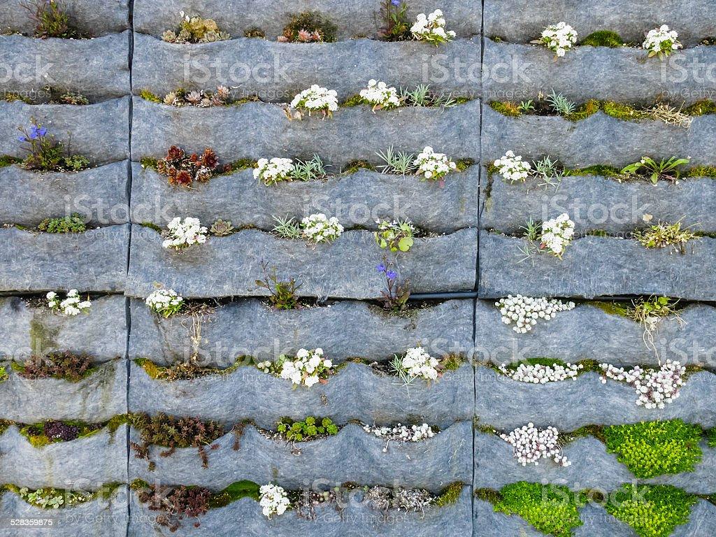Vertical garden in an outdoor stairwell stock photo