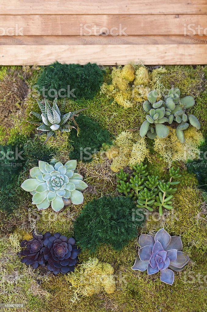 Vertical Garden of Succulents and Moss royalty-free stock photo