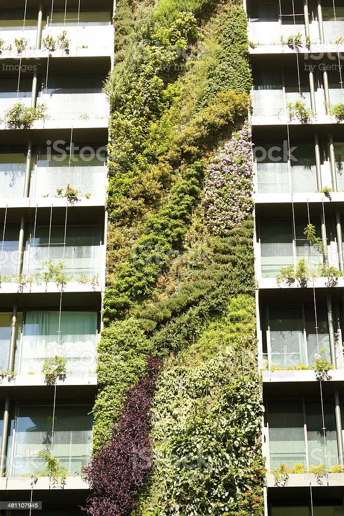 Vertical garden-green wall on apartment building stock photo