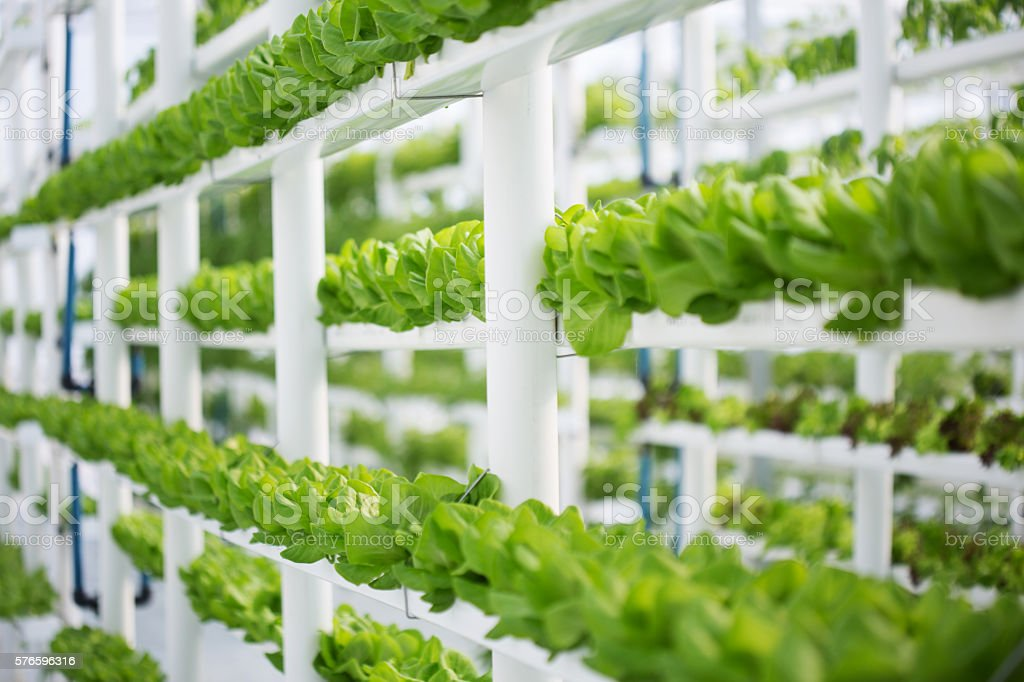 Vertical Hydroponic Lettuce Farm stock photo