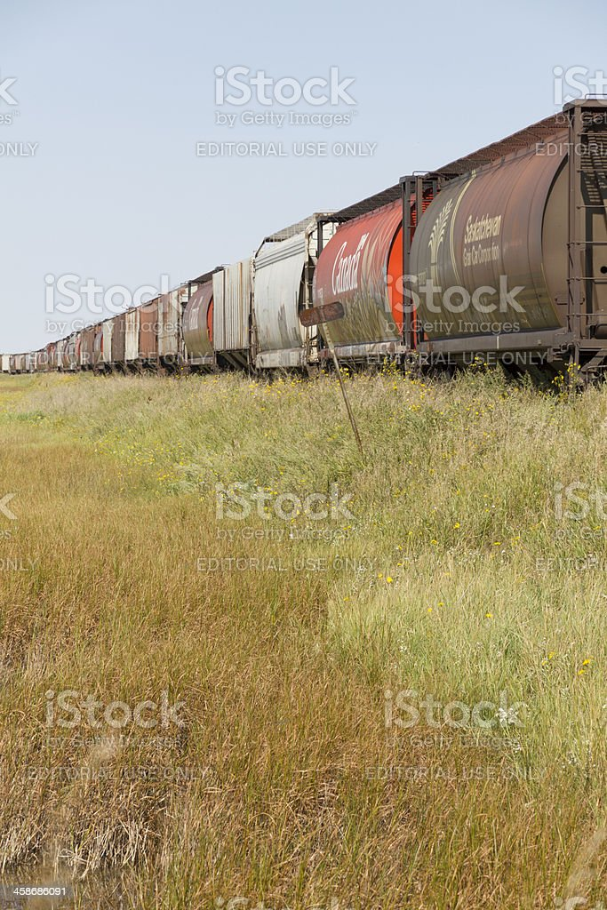 Vertical Image of Canadian Grain Cars on Siding royalty-free stock photo