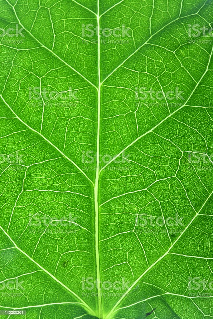 Vertical macro leaf royalty-free stock photo