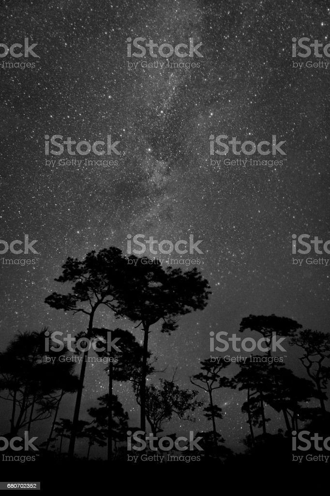 Vertical milky way with tree silhouette in foreground stock photo