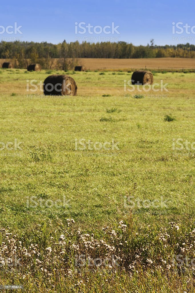 Vertical prairie landscape with foregound in focus. stock photo