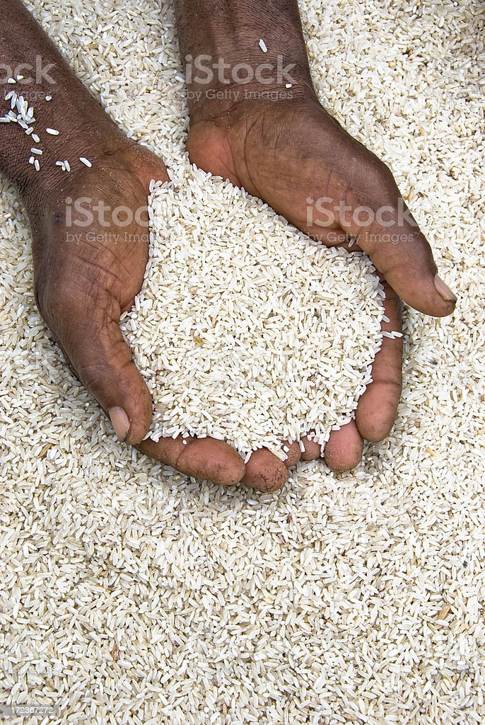 Vertical shot of hands holding rice for survival stock photo