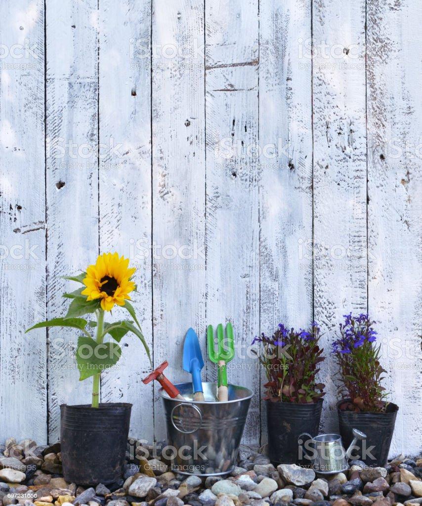 Vintage planting flowers concept, summer background