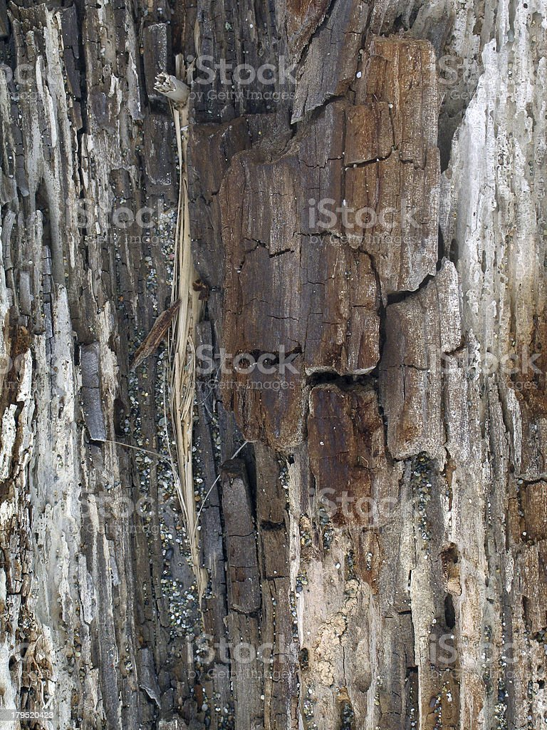 Vertical textured pattern of dry cracked tree royalty-free stock photo