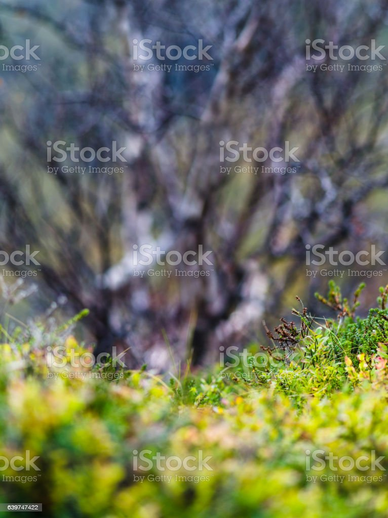 Vertical vivid micro toy field meadow nature background backdrop stock photo