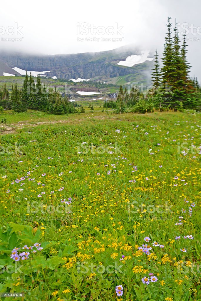 Vertical - Wildflowers, fog, and snow capped mountains. stock photo