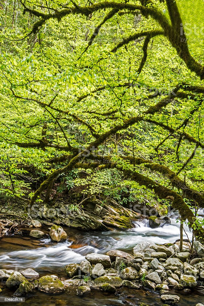 Vertical-white water stream, spring in the Great Smoky Mountains. stock photo