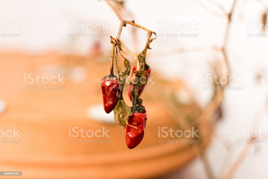 Vertrocknete Chili stock photo