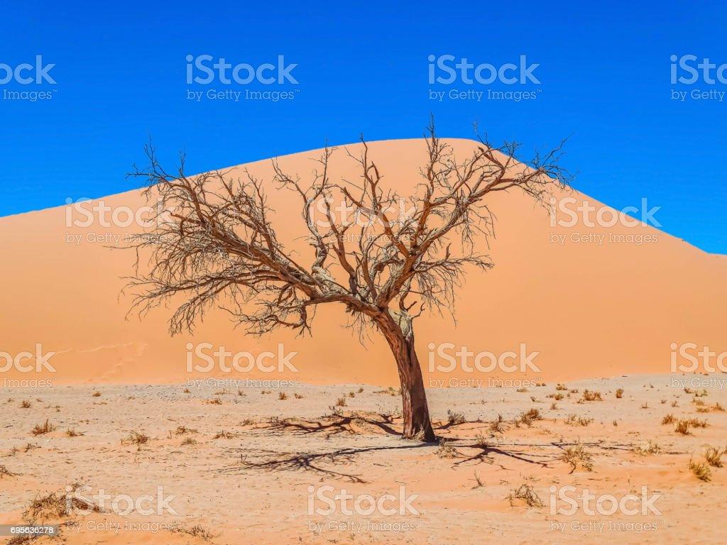 vertrockneter Baum stock photo