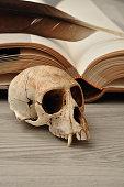 Vervet monkey skull displayed next to an open book