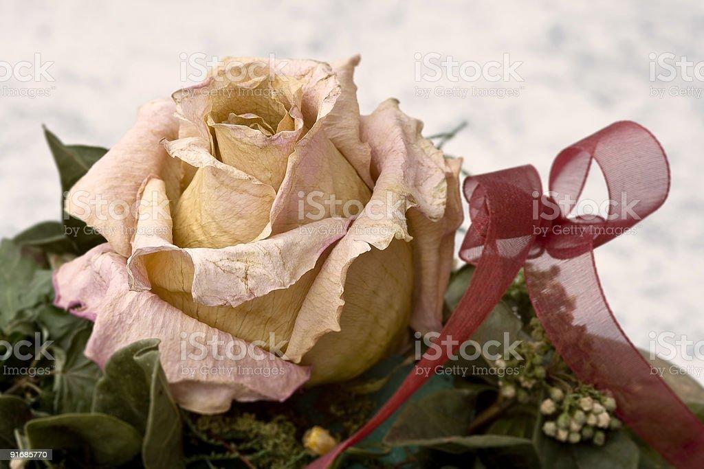 Verwelkte Rose stock photo