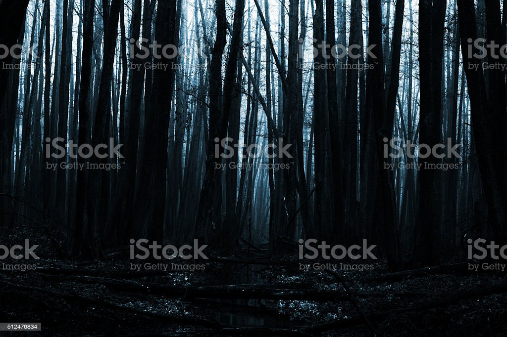 Very Dark Mysterious Forest stock photo
