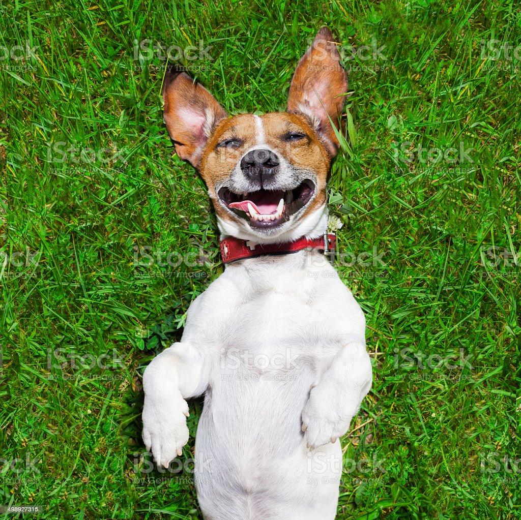 very funny dog stock photo