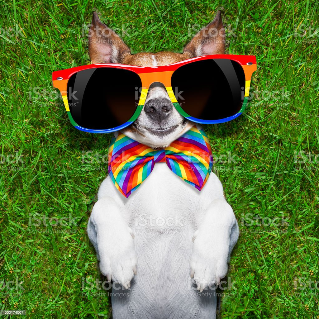 very funny gay dog stock photo