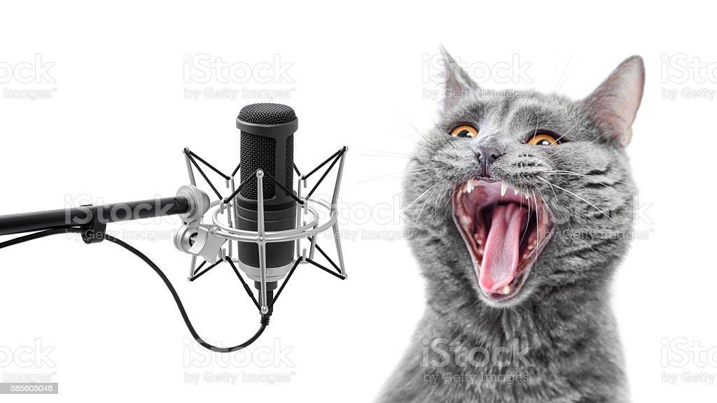 Very loud singing cat stock photo