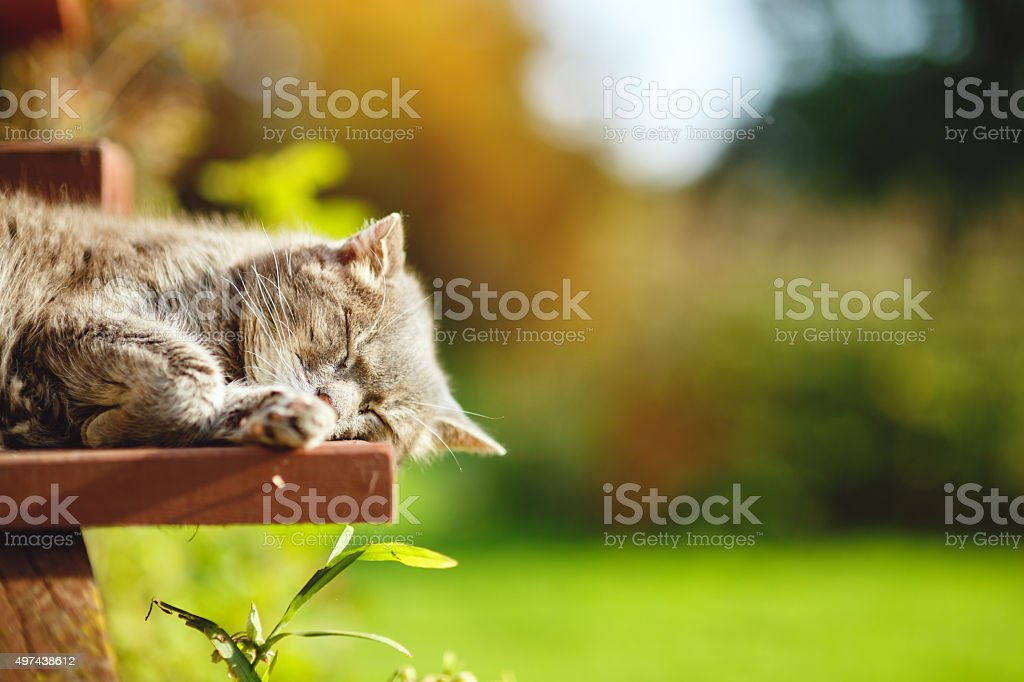 Very old cat sleeping stock photo