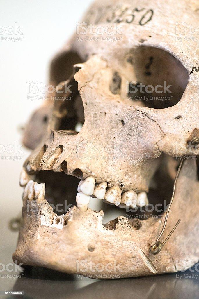 very old damaged skull stock photo
