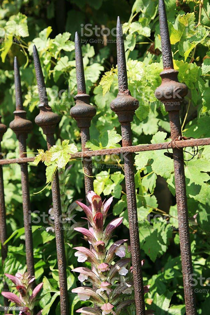 Very old iron garden fence stock photo