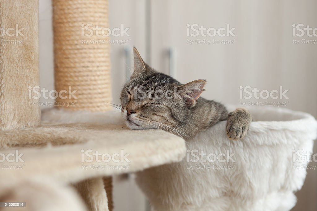 very relaxed cat stock photo