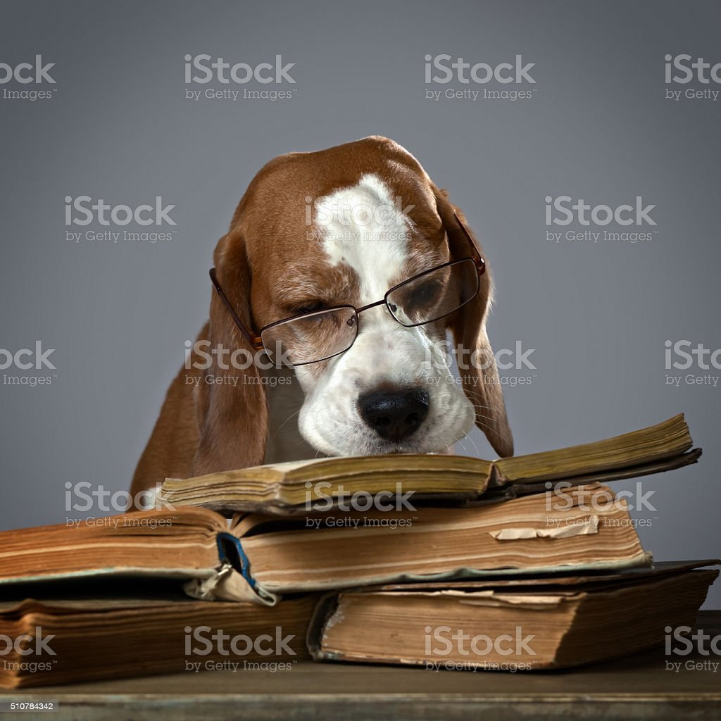very smart dog stock photo