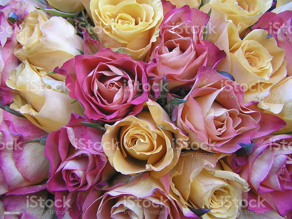 very special wedding roses royalty-free stock photo