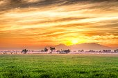 Very vast, broad  rice field, streched into the horizon