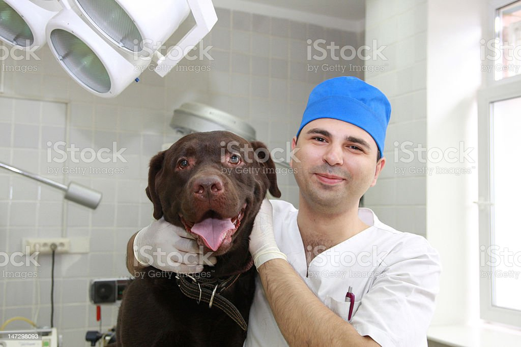 Vet and dog. royalty-free stock photo