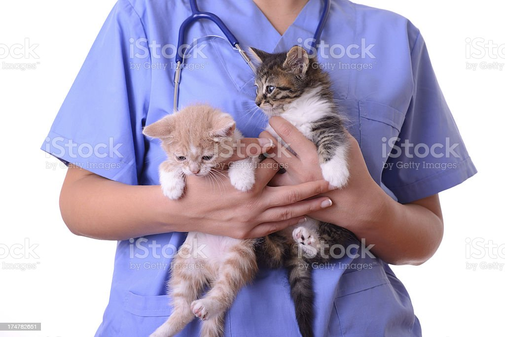 Vet and two kittens royalty-free stock photo