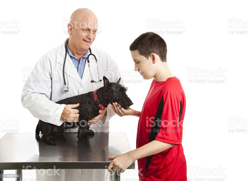 Vet Cares For Teens Dog royalty-free stock photo