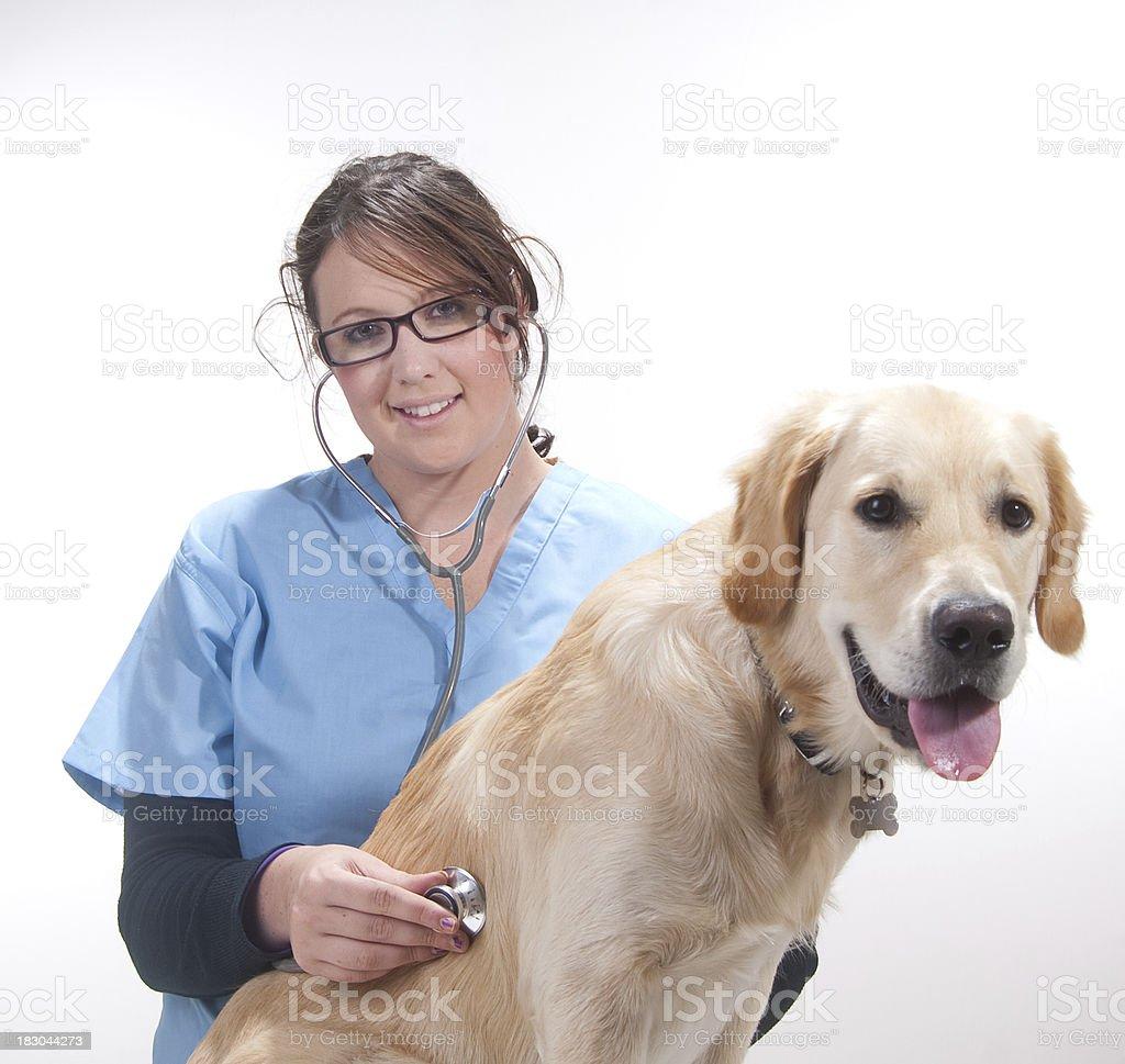 vet check up royalty-free stock photo