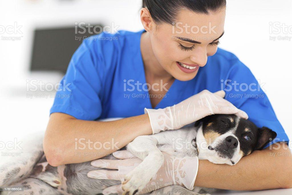 vet comforting sick dog stock photo